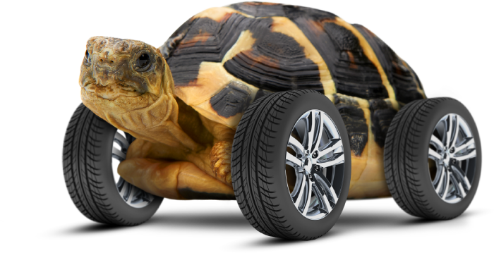 VIOOH_Tortoise-Wheels (1)